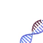 CRISPR gene modifications DNA strand