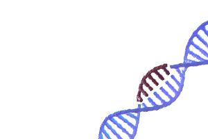 Ethics & Policy Issues in CRISPR Gene Editing - Course Image